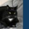 Narzędzia CAT – najlepsi przyjaciele tłumacza